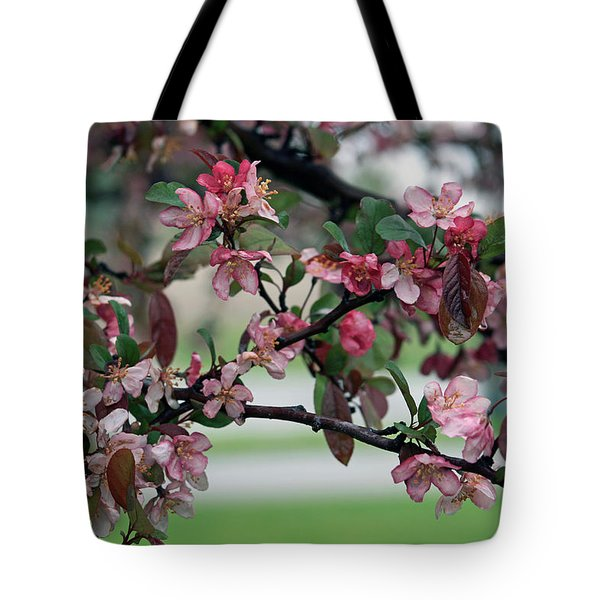 Tote Bag featuring the photograph Apple Blossom Time by Kay Novy