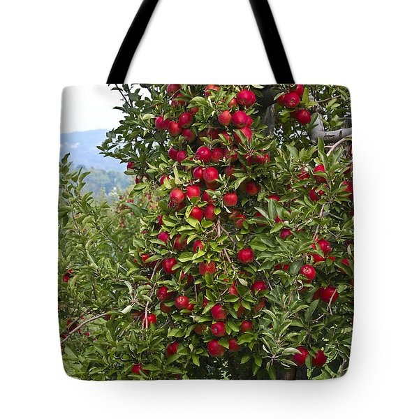Apple Tree Tote Bag by Anthony Sacco