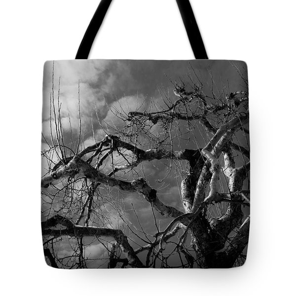 Apple Tree Bw Tote Bag