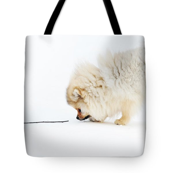 Apport Tote Bag by Jenny Rainbow