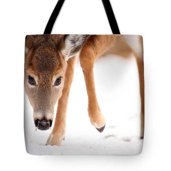 Approaching Tote Bag by Karol Livote