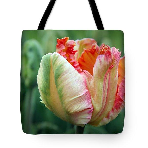 Apricot Parrot Tulip Tote Bag