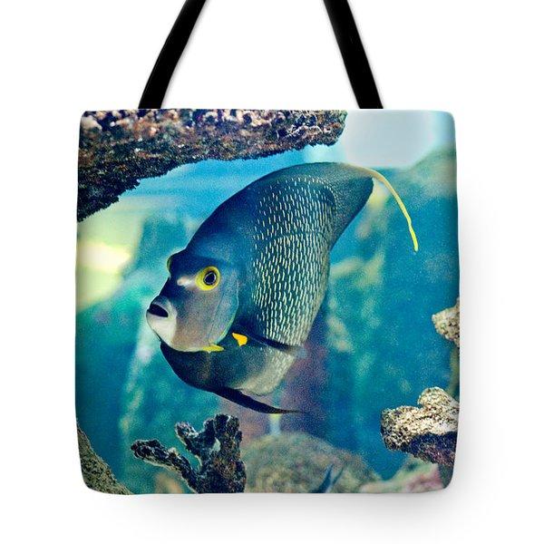 French Angelfish Tote Bag