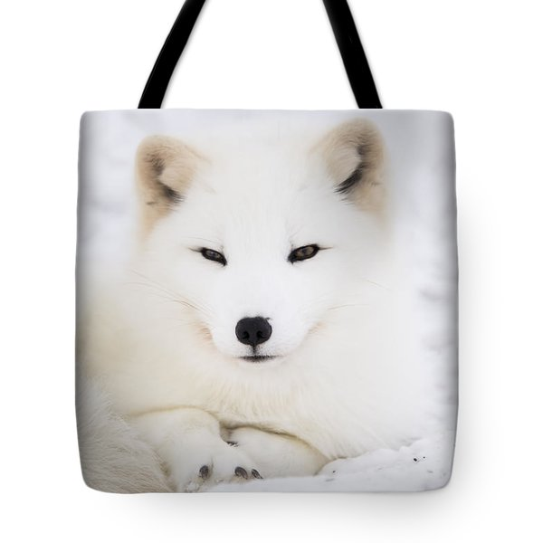 Arctic Fox Resting In The Snow Tote Bag