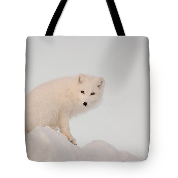 Arctic Fox Stands In Late Afternoon Sun Tote Bag