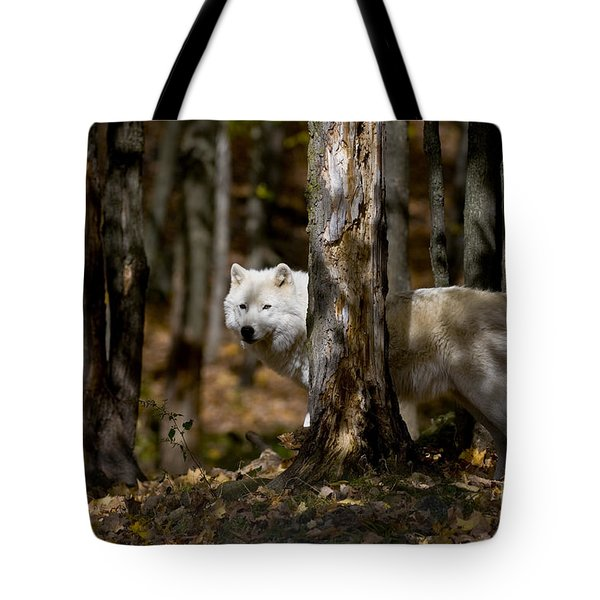Tote Bag featuring the photograph Arctic Wolf In Forest by Wolves Only