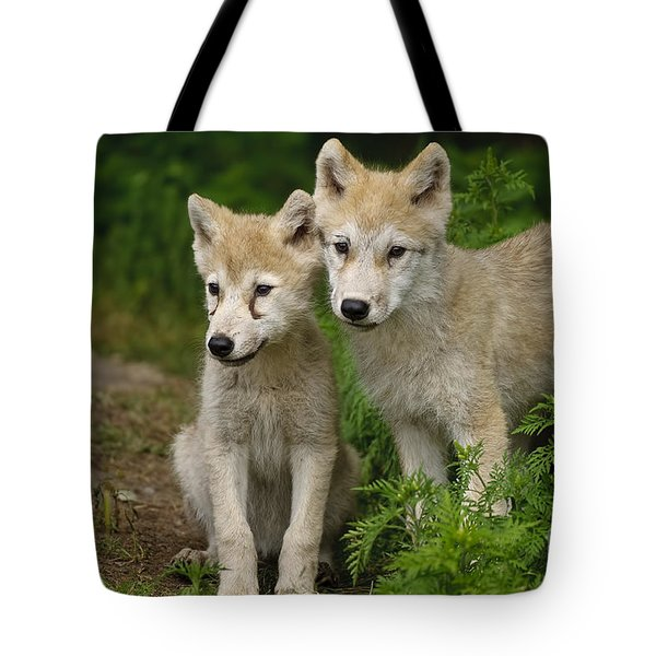 Arctic Wolf Puppies Tote Bag