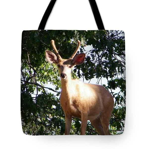 Are You A Friend Tote Bag