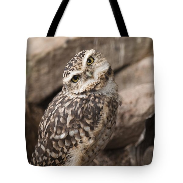 Are You Looking At Me? Tote Bag by Anne Gilbert