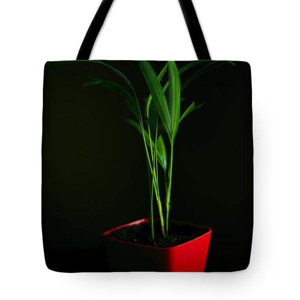 Areca Palm Tote Bag