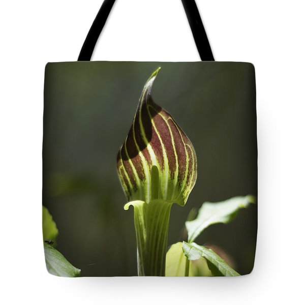 Tote Bag featuring the photograph Arisaema Triphyllum Jack-in-the-pulpit by Rebecca Sherman