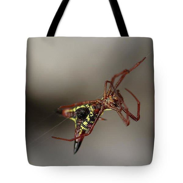 Arrow-shaped Micrathena Spider Starting A Web Tote Bag
