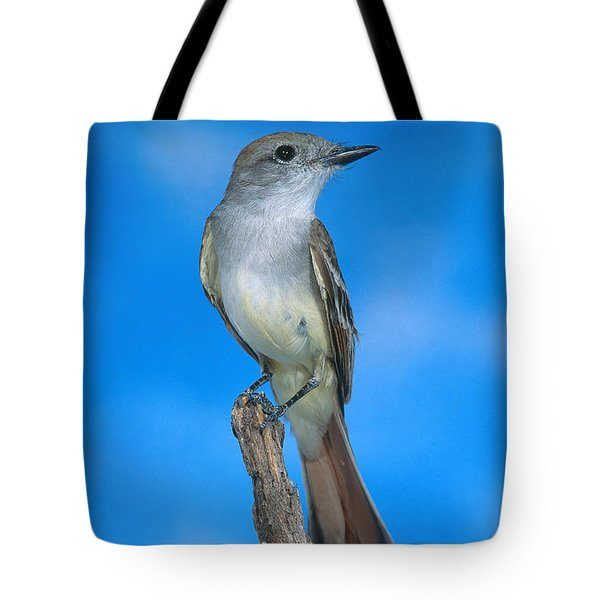 Ash-throated Flycatcher Tote Bag by Anthony Mercieca