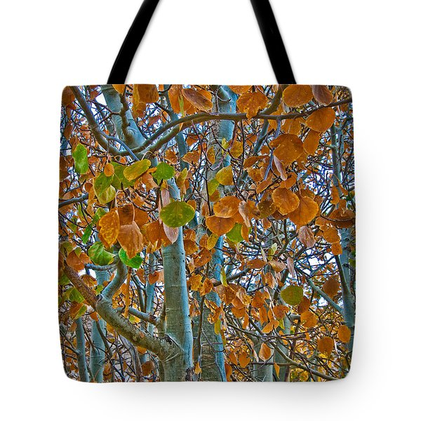 Tote Bag featuring the photograph Aspen Leaves In The Fall by Mae Wertz