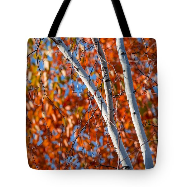 Tote Bag featuring the photograph Aspen by Sebastian Musial