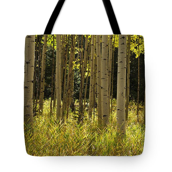 Aspen Trees All In A Row Tote Bag