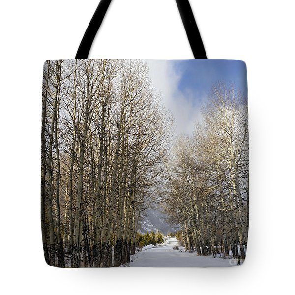 Aspen Trees Along Snowy Colorado Path Tote Bag