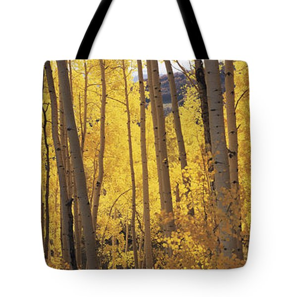 Aspen Trees In Autumn, Colorado, Usa Tote Bag