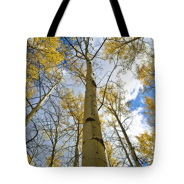 Aspen Tress To The Sky Tote Bag