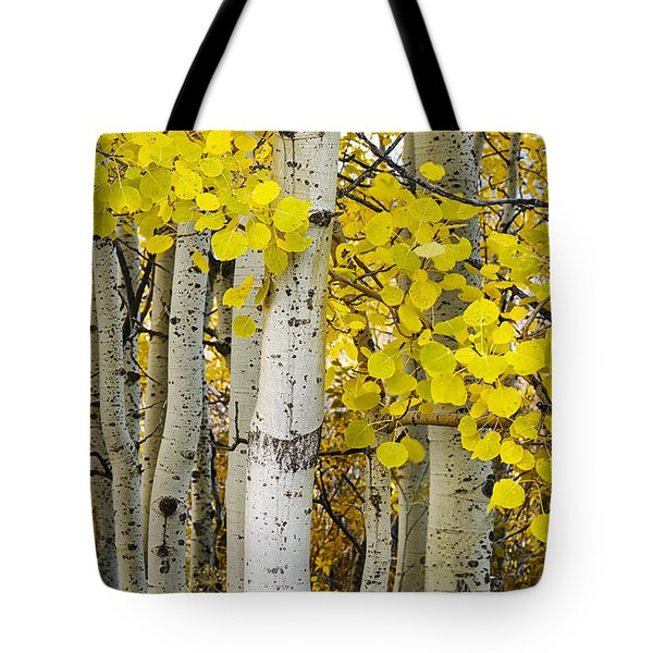 Aspens At Autumn Tote Bag