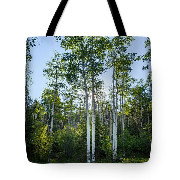 Aspens At Sunrise 1 - Santa Fe New Mexico Tote Bag