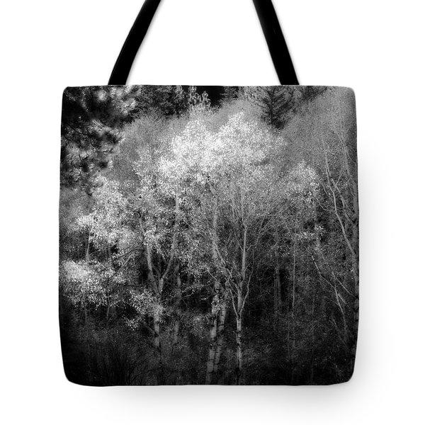 Aspens In Morning Light Bw Tote Bag