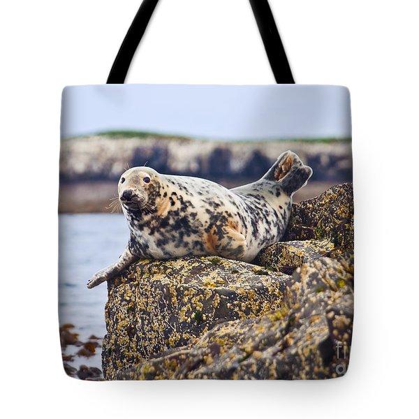 Atlantic Grey Seal Halichoerus Grypus Tote Bag by Liz Leyden