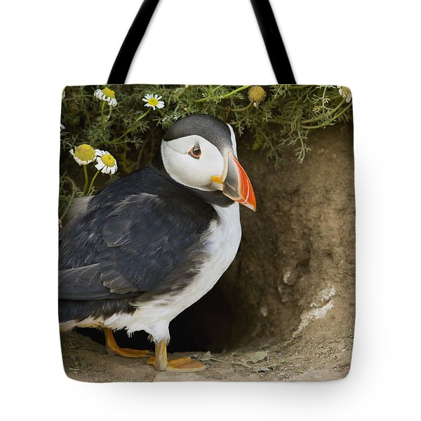 Atlantic Puffin At Burrow Skomer Island Tote Bag by Sebastian Kennerknecht