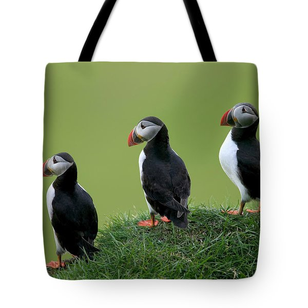 Atlantic Puffin Trio On Cliff Tote Bag by Cyril Ruoso