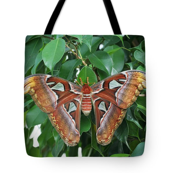 Tote Bag featuring the photograph Atlas Moth #2 by Judy Whitton