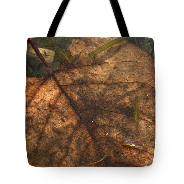 Atres 11 Tote Bag by Karol Livote