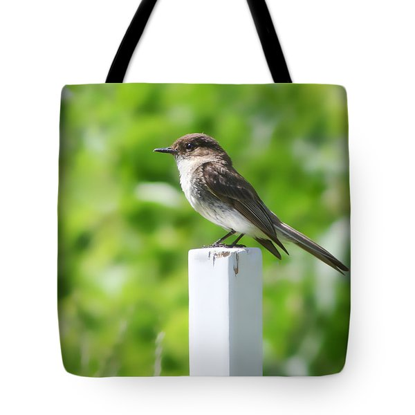 Tote Bag featuring the photograph Attentive Phoebe by Anita Oakley