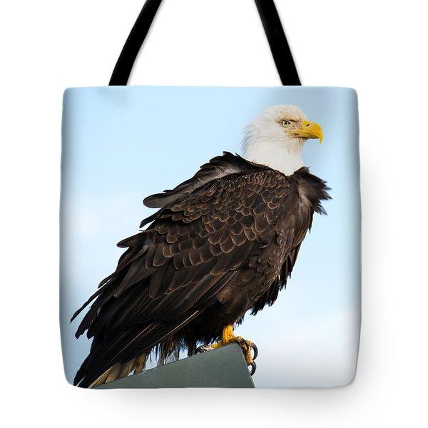 Attractive Bald Eagle Tote Bag by Debra  Miller