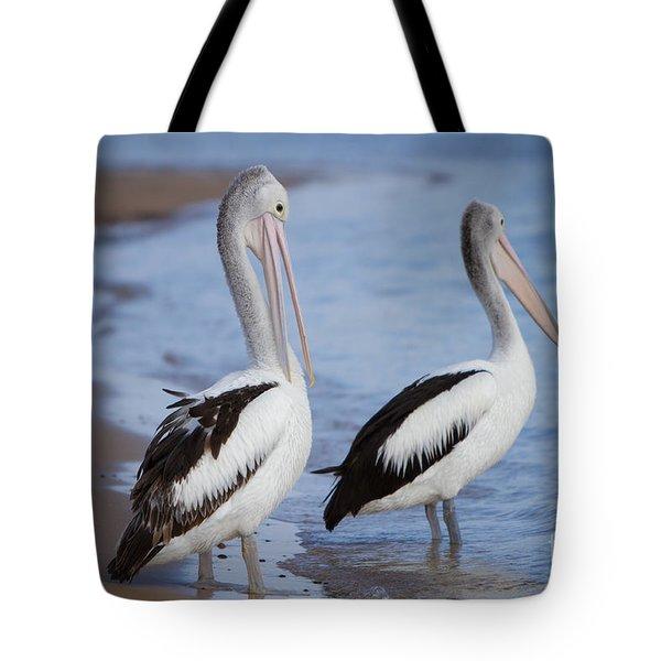 Australian Pelicans Tote Bag