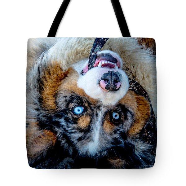 Australian Shepherd Tote Bag by Cheryl Baxter