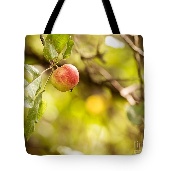 Autumn Apple Tote Bag by Matt Malloy