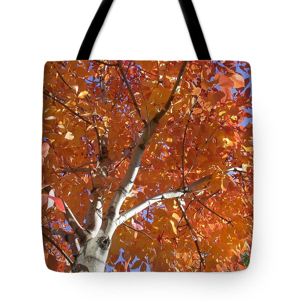 Autumn Aspen Tote Bag