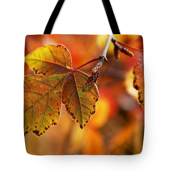 #autumn Tote Bag by Becky Furgason