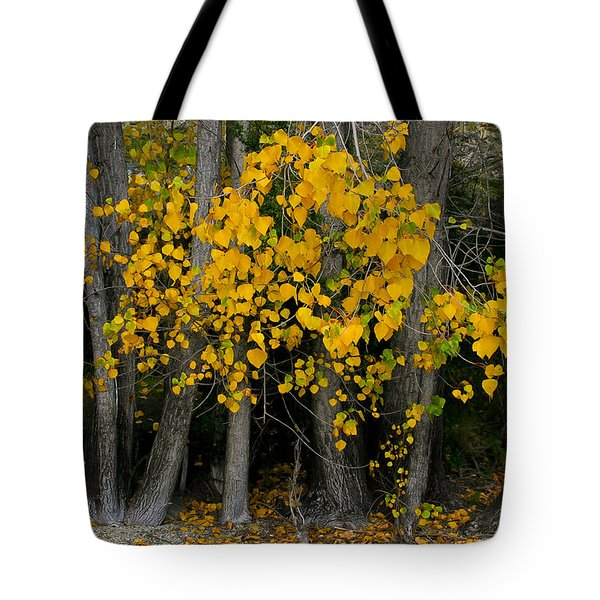 Autumn Breakout Tote Bag