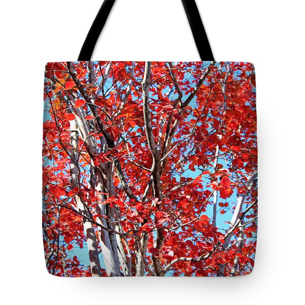 Autumn Brilliance V Tote Bag by Suzanne Gaff