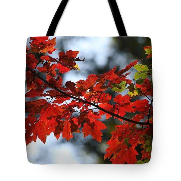 Autumn Contrasts Tote Bag by Vadim Levin