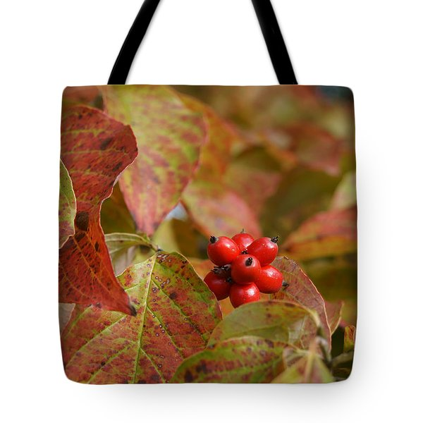 Tote Bag featuring the photograph Autumn Dogwood Berries by MM Anderson