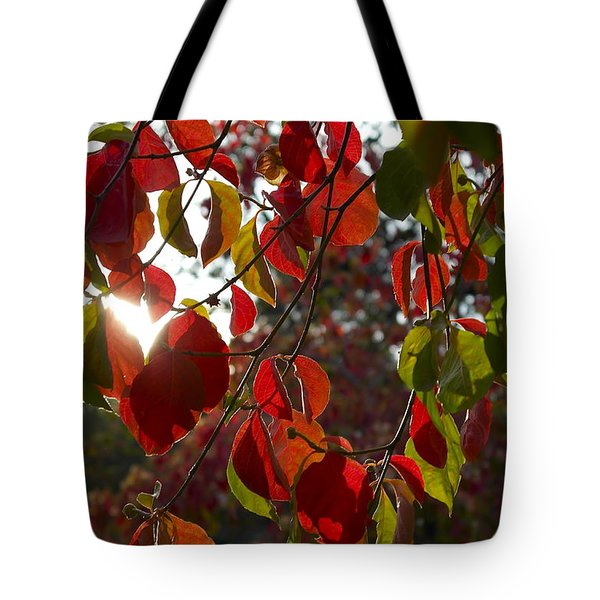 Autumn Dogwood In Evening Light Tote Bag