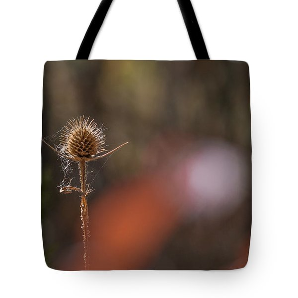 Tote Bag featuring the photograph Autumn Dry Teasel by Jivko Nakev