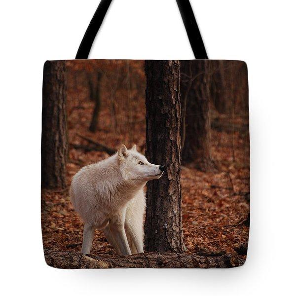 Autumn Gaze Tote Bag