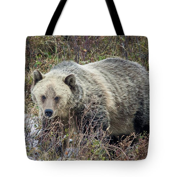 Tote Bag featuring the photograph Autumn Grizzly by Jack Bell
