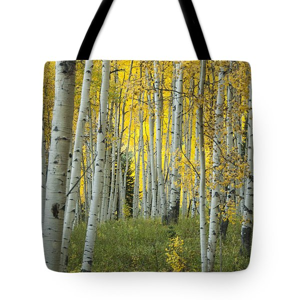 Autumn In The Aspen Grove Tote Bag