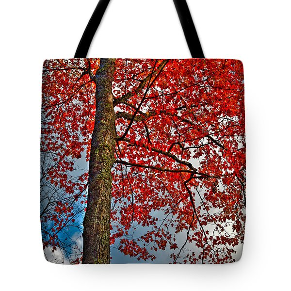 Autumn In The Trees Tote Bag by David Patterson