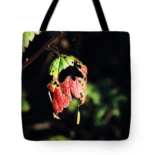 Tote Bag featuring the photograph Autumn Leaf by Cathy Mahnke