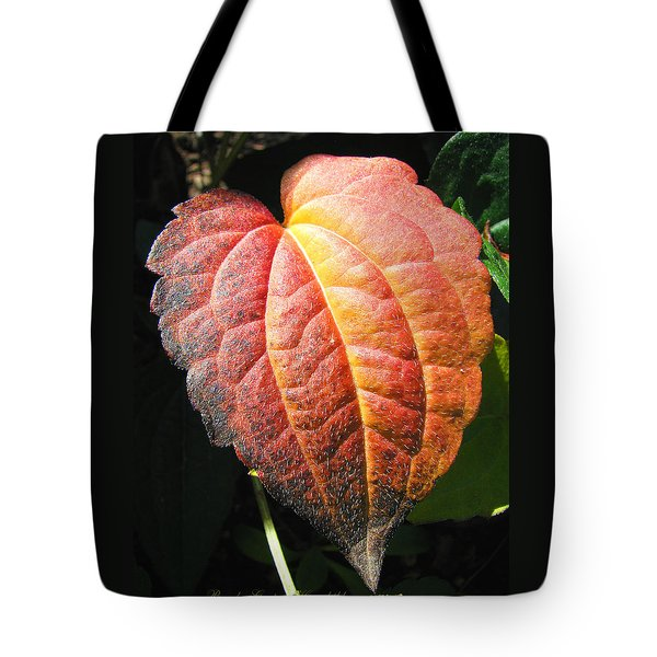 Tote Bag featuring the photograph Autumn Leaf Macro by Brooks Garten Hauschild